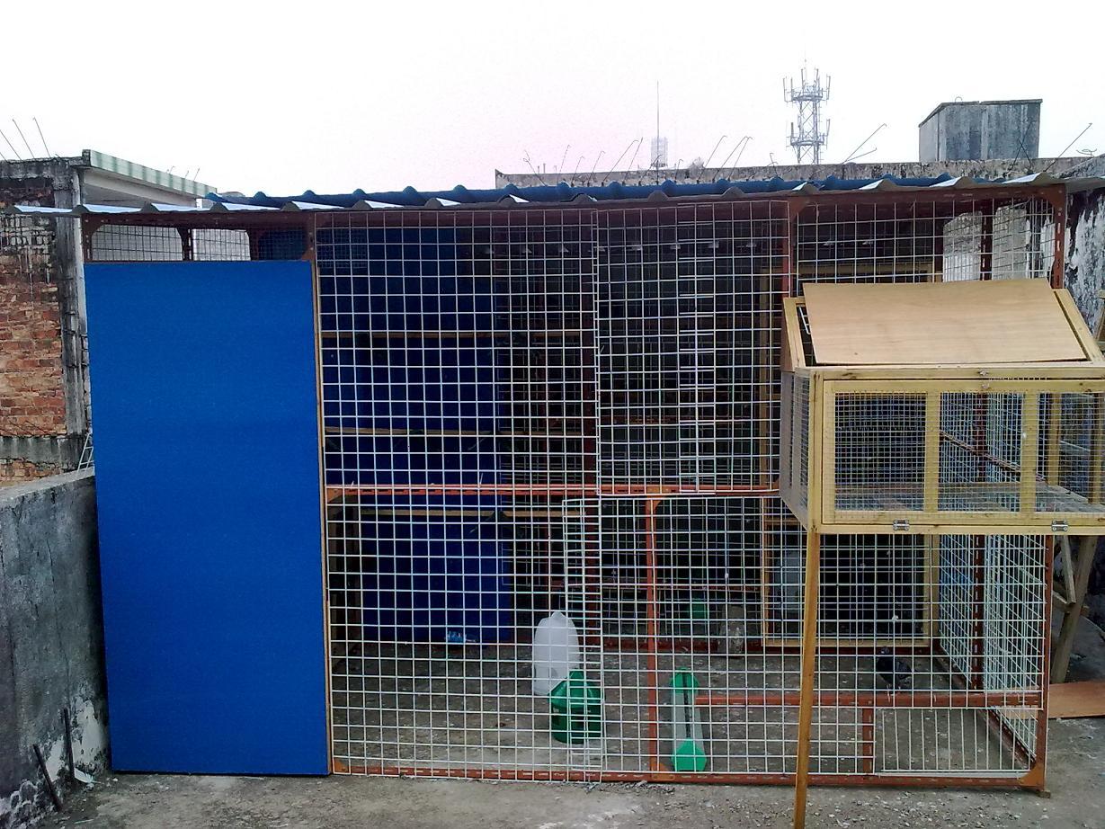 中国信鸽信息网论坛-鸽舍建设-论坛文件展示