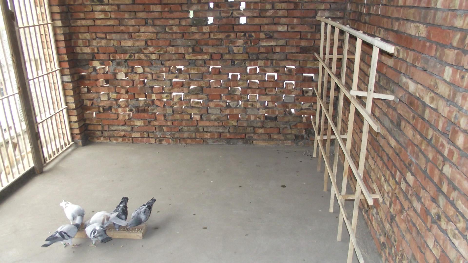 中国信鸽信息网论坛 鸽舍建设 论坛展区 -鸽舍建设 论坛展区