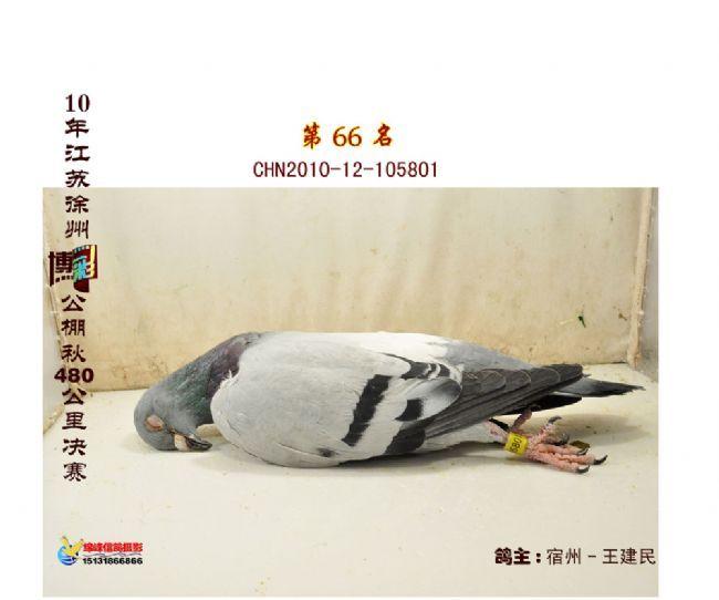 流星瞬间:中信网2010年11月图片精选-中国信鸽